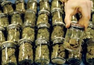 Cannabis Drug
