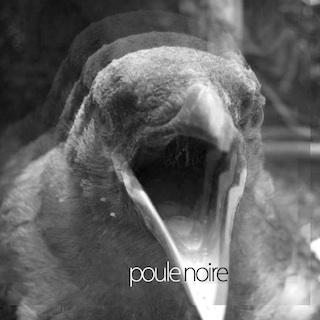 Poule d'Or 4.5