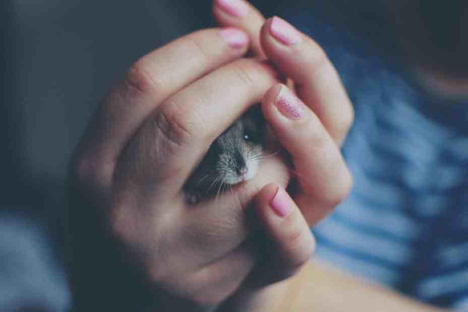 rongeur dans une main