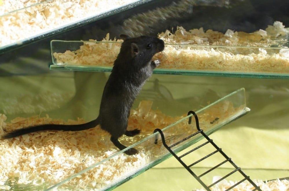 litiere pour hamster