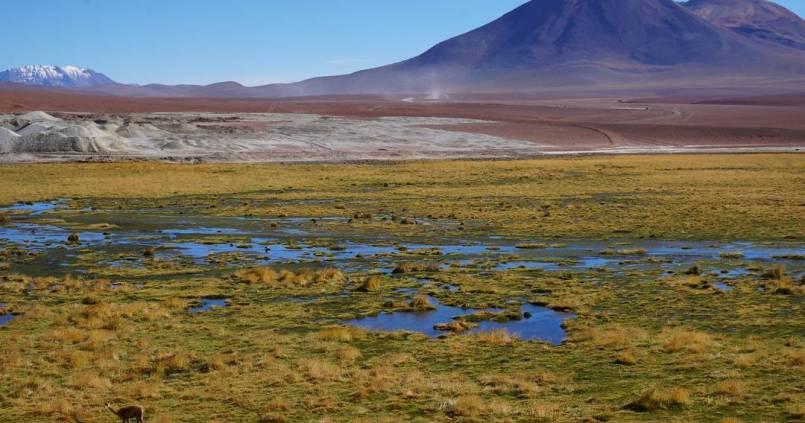 Serge le lama est de la partie dans le désert d'Atacama 1