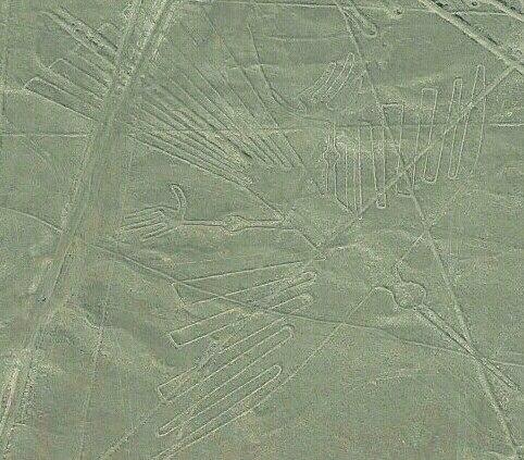Le fameu condor des lignes de Nazca 1