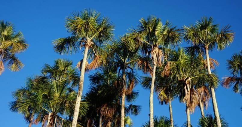 Ceci n'est pas Miami, welcome to Amazonia 🌴 1