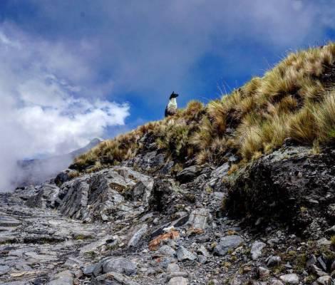 Le roi lama dans sa montagne. 19