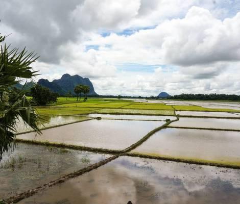 Des rizières inondées à perte de vue. 17