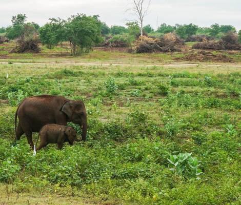 Moment de joie quand on croise un bébé éléphant 🐘 et sa maman. 9