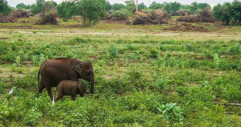 Moment de joie quand on croise un bébé éléphant 🐘 et sa maman. 1