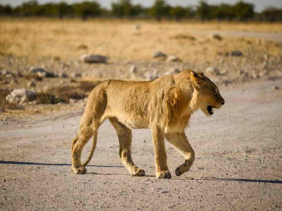 Tourisme en Namibie : les 6 incontournables de notre road trip 2