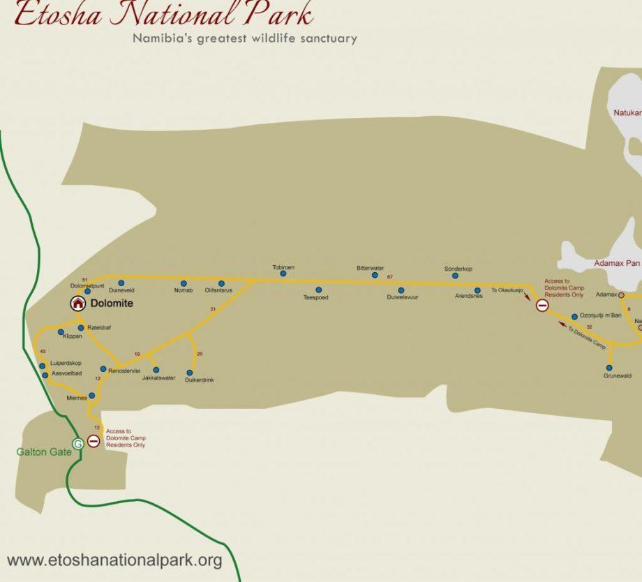 Safari au parc national d'Etosha en Namibie 6