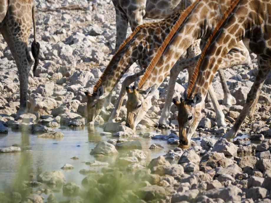 Notre top 5 des plus beaux lodges en Namibie 9