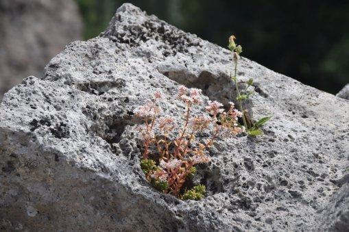 fleurs sur pierre