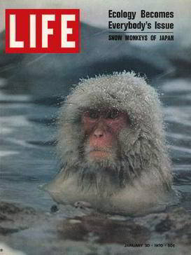 Couverture du magazine Life montrant une photo d'un macaque japonais dans des sources chaudes : Shiga Kogen, Japon, 30 Janvier 1970. (Photo de Co Rentmeester/Time & Life Pictures/Getty Images)