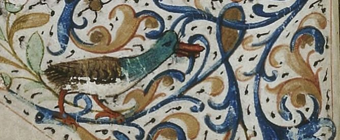 canard enluminure
