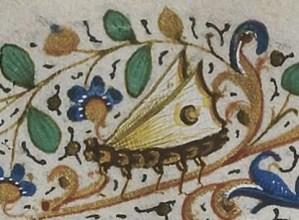 papillon enluminure