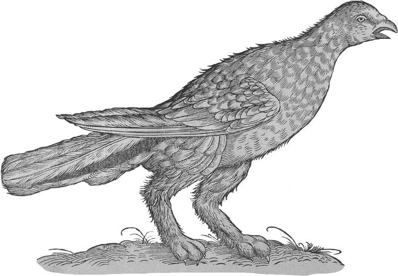 perdrix blanche - Gallica/BNF