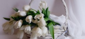 How to Increase the Beauty of White Tulip Flowers