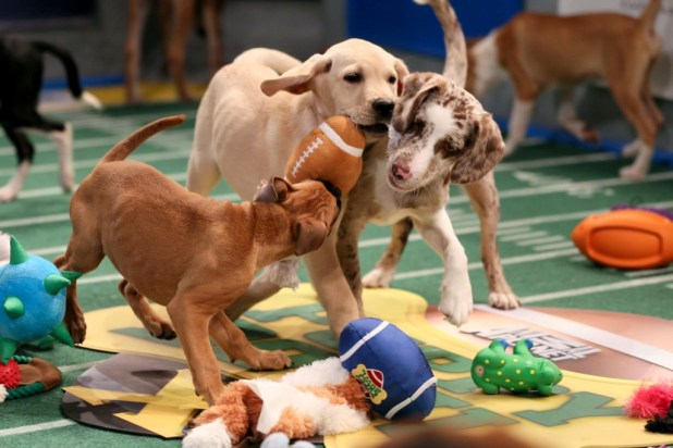 10-Facts-You-Don't-Know-about-Puppy-Bowl-2 Top 10 Facts You Don't Know about Puppy Bowl