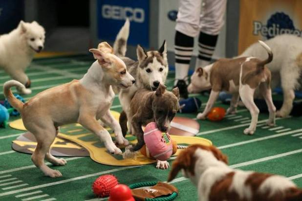 10-Facts-You-Don't-Know-about-Puppy-Bowl-3 Top 10 Facts You Don't Know about Puppy Bowl