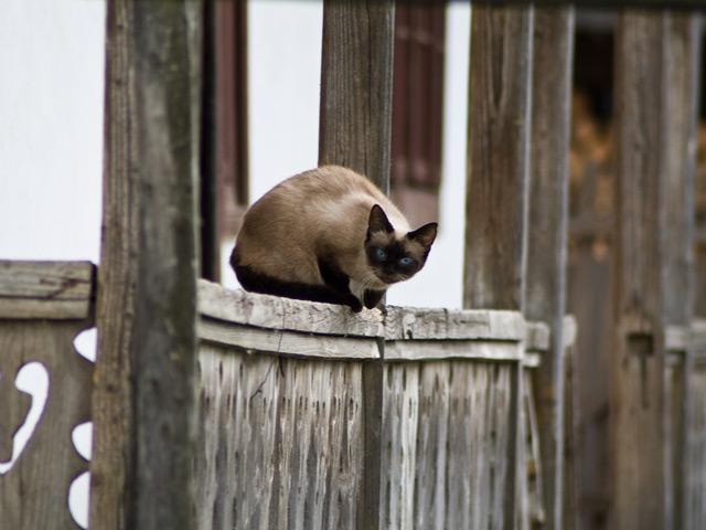curious_cat.jpg