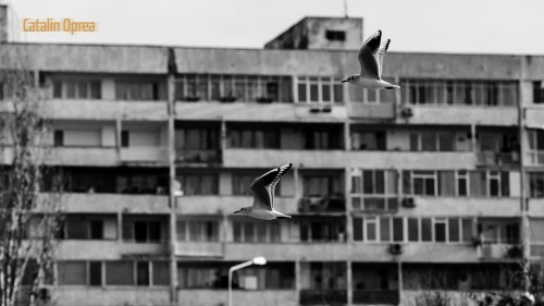 Day 14 - Seagulls