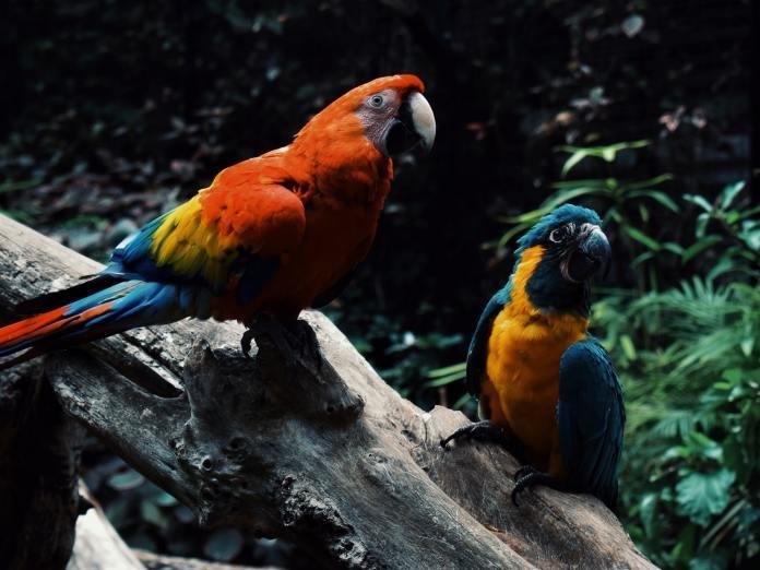tropical-fauna