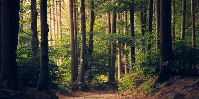 astonishing forest phenomena