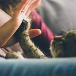 Does my cat love me? 6 signs to look for
