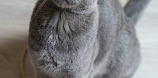 training-your-cat-can-be-easy-three-helpful-tips