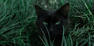 cats-and-their-amazing-properties