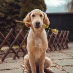 the-best-dog-breeds-for-first-time-owners