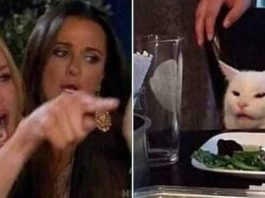 woman yelling at cat meme