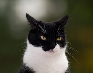 cat-aggression-explained-what-youre-doing-wrong