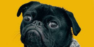 Losing a pet has a serious and painful effect on us