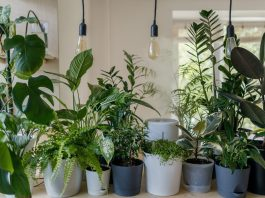 5 Amazing Houseplants for Certified Plant Murderers