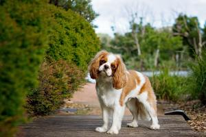 Man's best friend: 5 of the most loving dog breeds