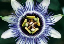 4 beautiful rare flowers from all over the world