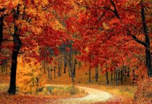 awesome-things-you-shouldnt-miss-out-on-this-autumn