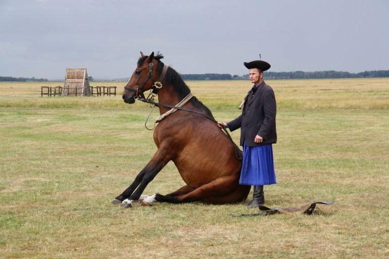 Svoje kone ovládajú dokonale