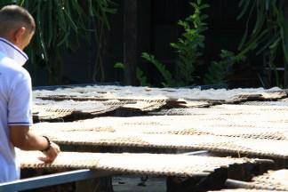 "Zastávka v ""noodle factory"", ukážka výroby ryžových rezancov"