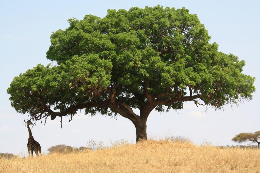 Krásna africká príroda