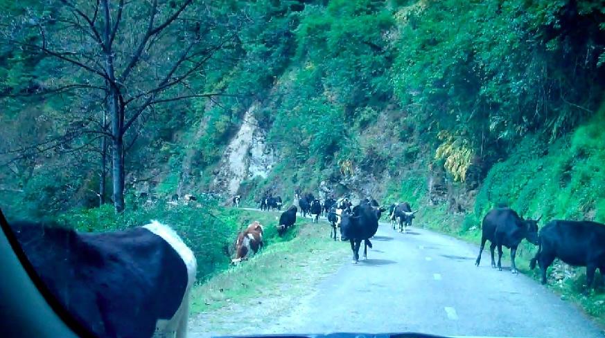 blog-2011-03-03-cattle.jpg