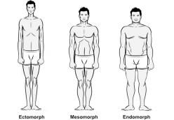 Stoffwechseltypen Mesomorph, Ektomorph, Endomorph