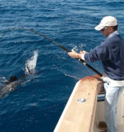 rig your baits properly to entice florida sailfish  [ 1200 x 976 Pixel ]