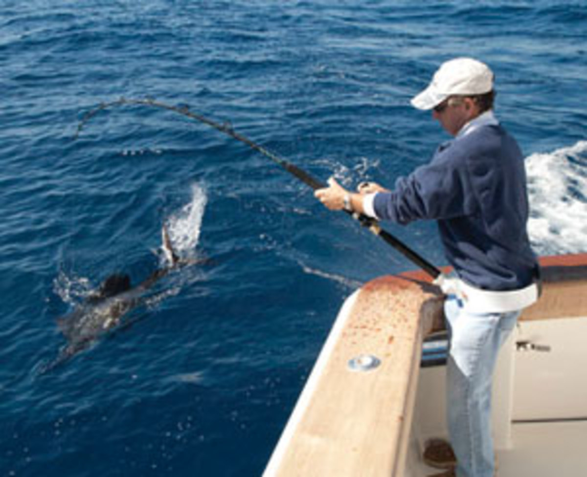 hight resolution of rig your baits properly to entice florida sailfish