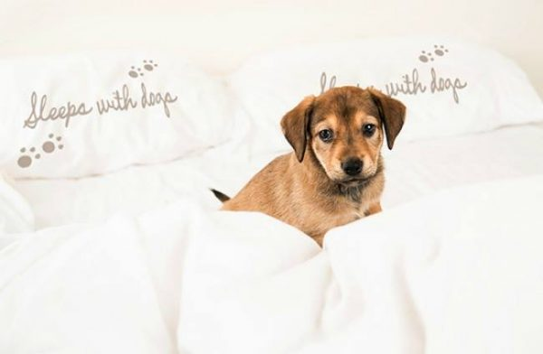 sleeps with dogs pillocases 2