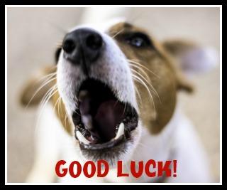 dog-good-luck