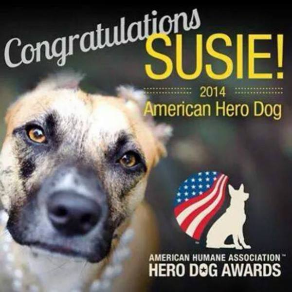 susie's hope american hero dog