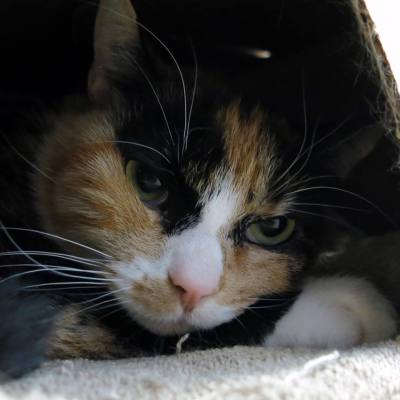 Pet Adoption – Meet Naula the Cat