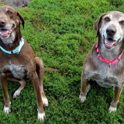 Dog Adoption- Meet Jackie and Zoe