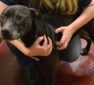 Adopt a Dog- Meet Felicity